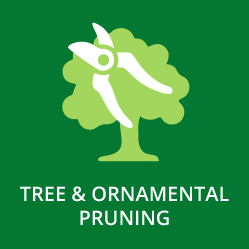 Tree and Ornamental Pruning