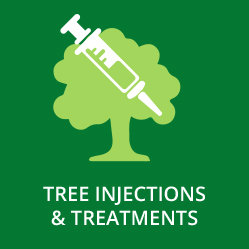 Tree Injections and Treatments
