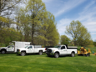 Bucks county tree removal and stump grinding