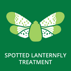 Spotted Lanternfly Treatment